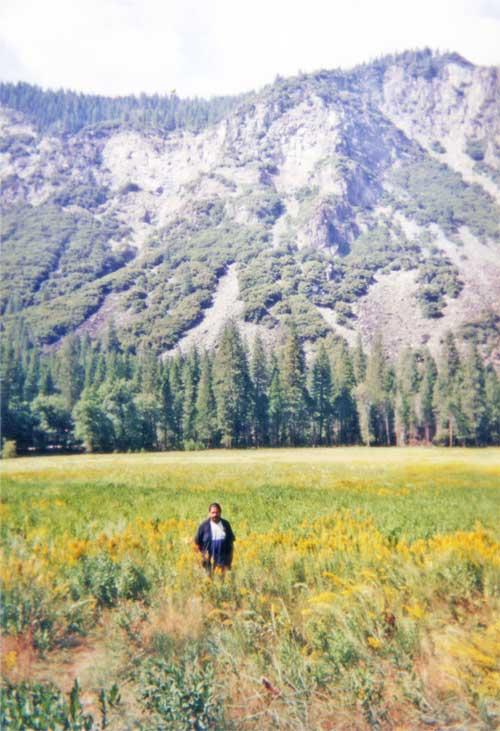 Yosemite National Park Budak Meja Belakang Pax Americana